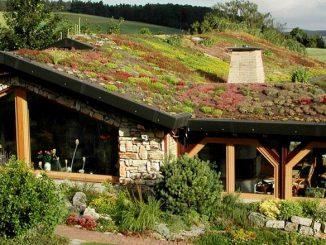 Grönt tak på lantligt hus